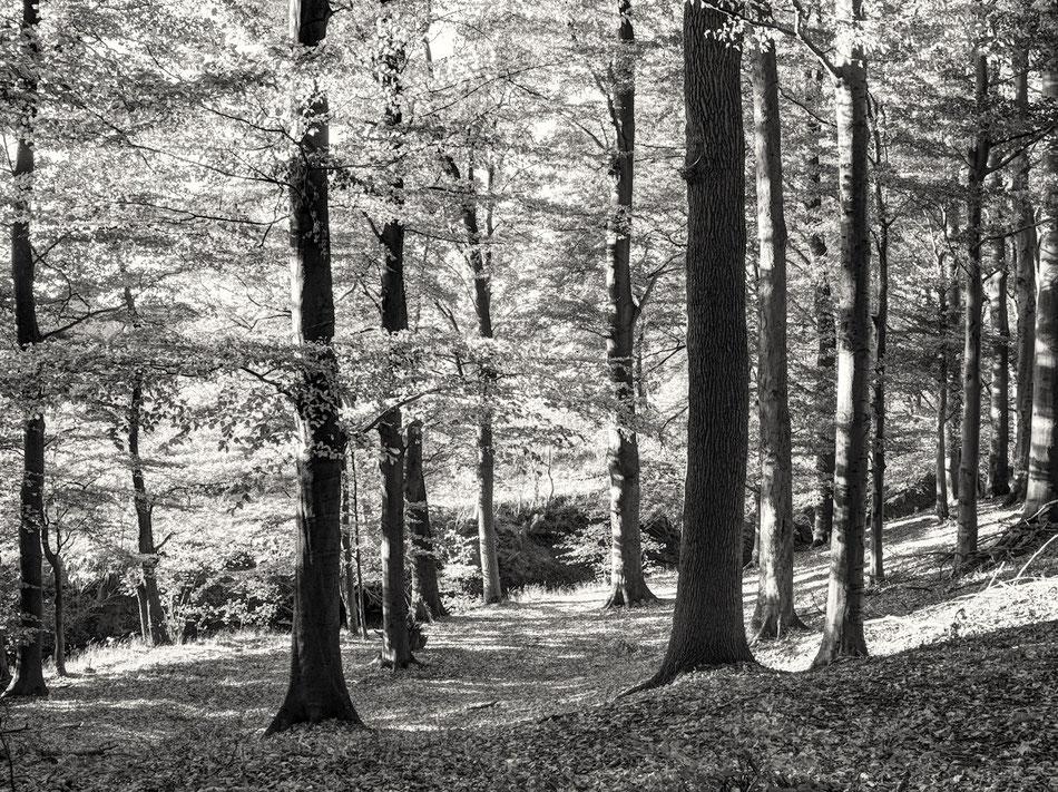 Kontrastreicher Herbstwald im Windwehetal