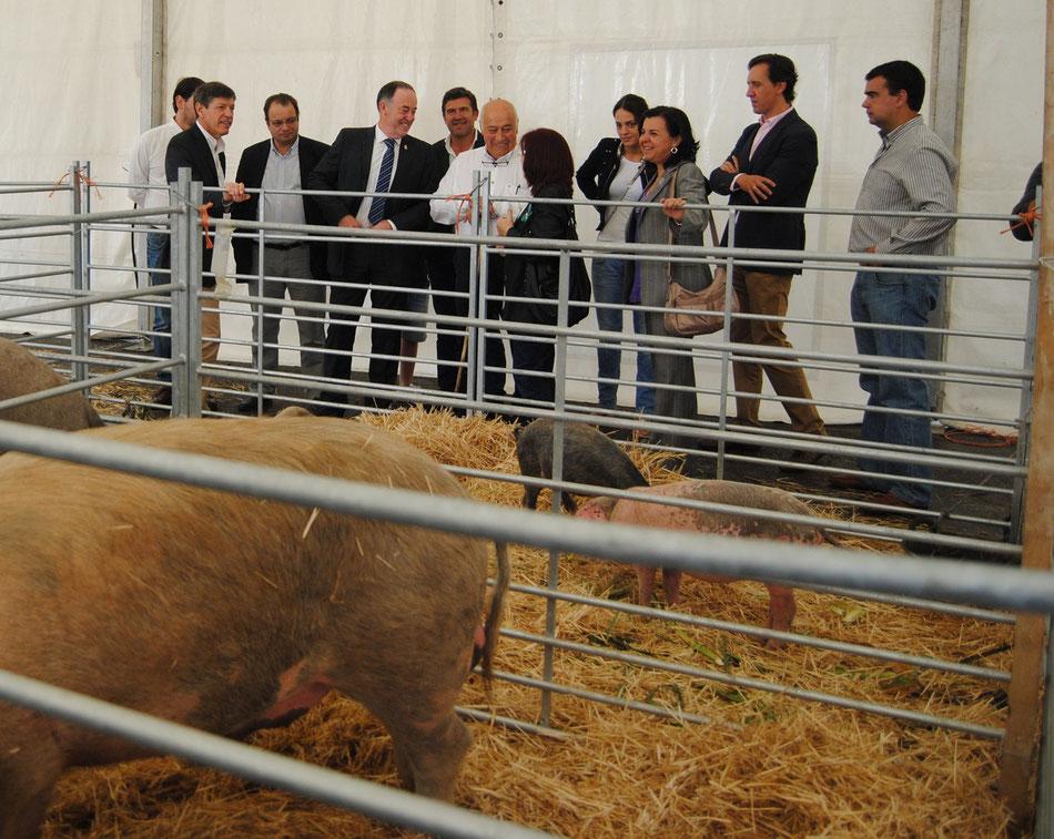 El Alcalde de Siero, Martínez Llosa, la consejera de Agroganadería y R.A. María Jesús Álvarez, y diferentes políticos de diversos partidos visitaron la carpa del gochu asturcelta