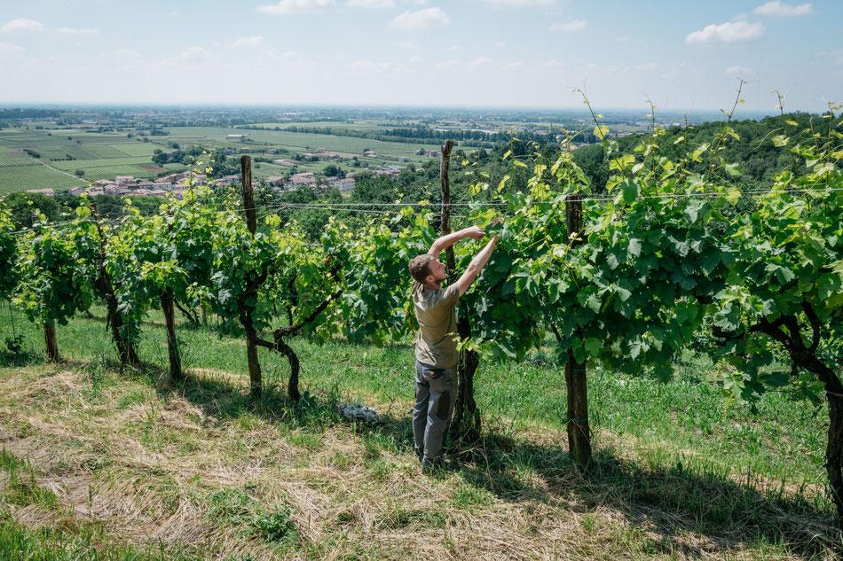 Aan het werk in de wijngaard