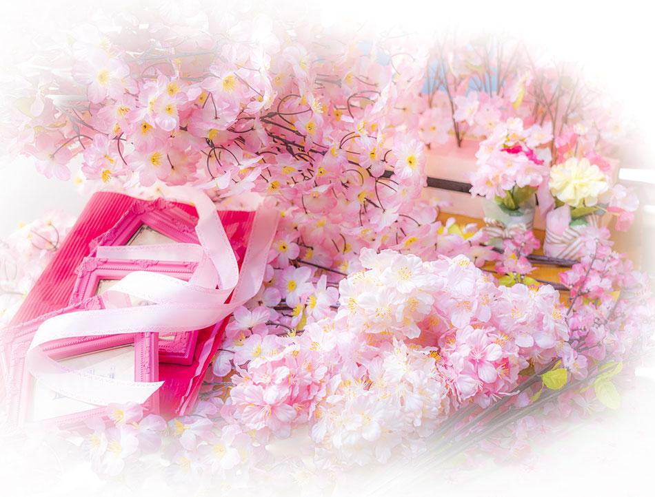 春のディスプレイで桜を咲かせました。スタジオ夢物語札幌