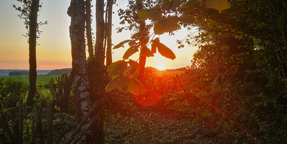 """L'affût """"Le geai"""" est placé à la lisère nord est du bois, il permet de bénéficier des premiers rayons du soleil"""