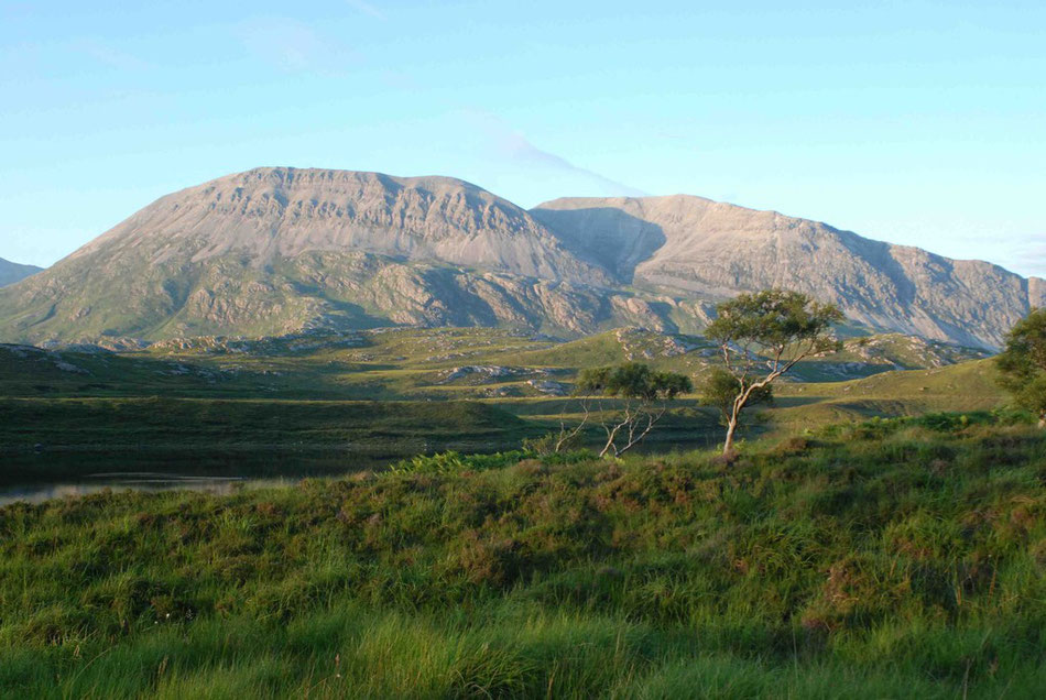 Arkle bathing in the highland evening sunshine