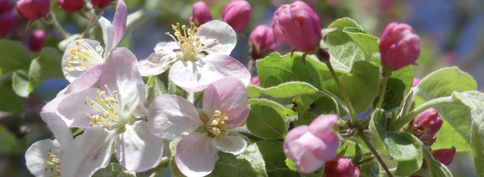 die innere Blüte fühlen, Freude wecken, verbunden sein mit Mutter Natur, strahlen und glücklich von innen sein