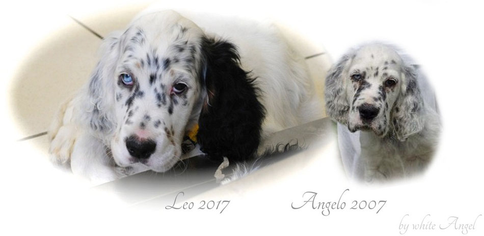 Leo geboren 2017 und Angelo geboren 2007. Beide haben ein strahlend blaues Auge.