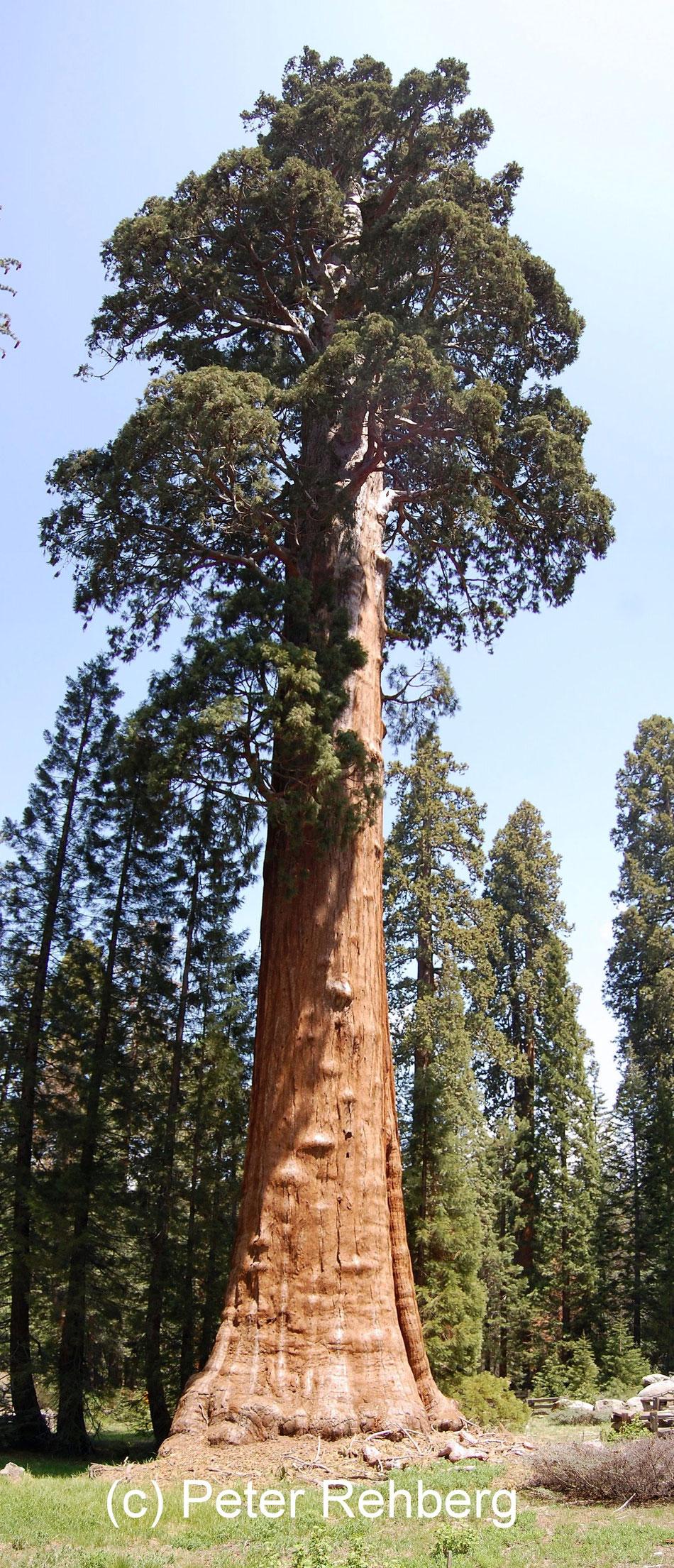 Big Tree Trail, Peter Rehberg