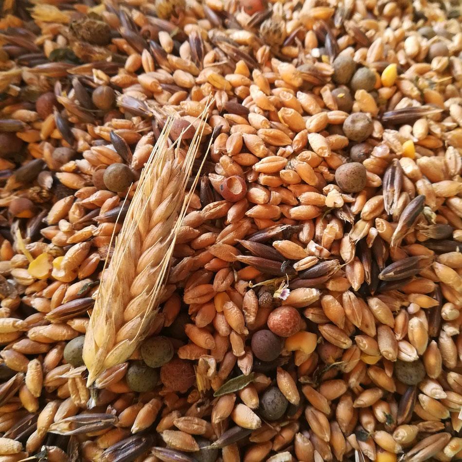 Les céréales que nous cultivons sur la ferme. Je trouve les graines magiques...