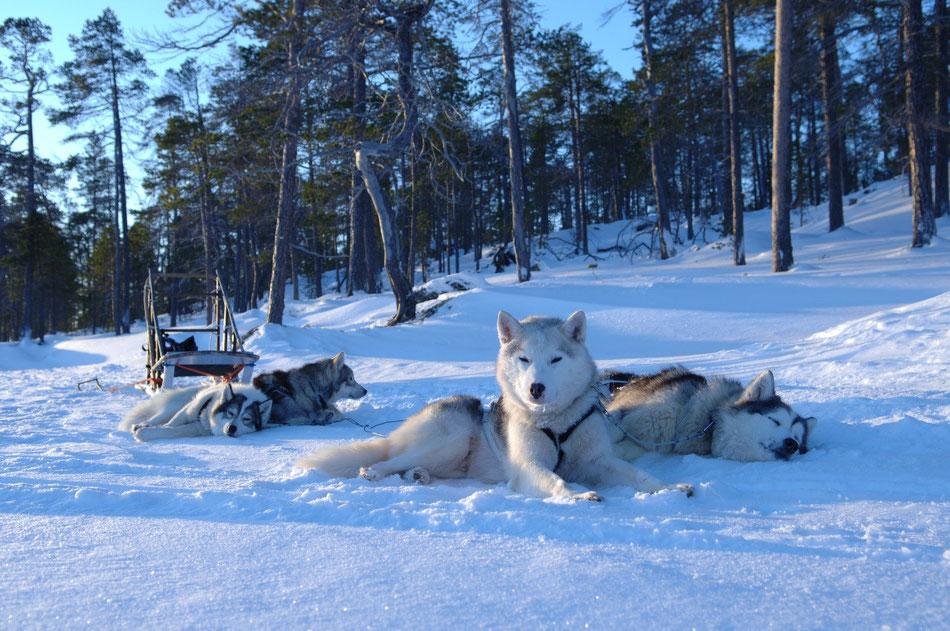 Aventuras Invernales en Laponia