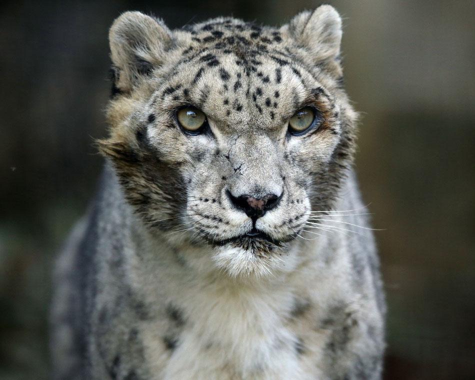 Foto: Steve Tracy      2014 - Shynghyz, Tama Zoo