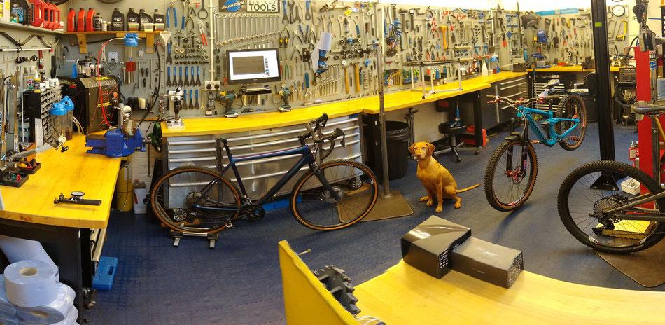 Stirling Bike Doctor workshop