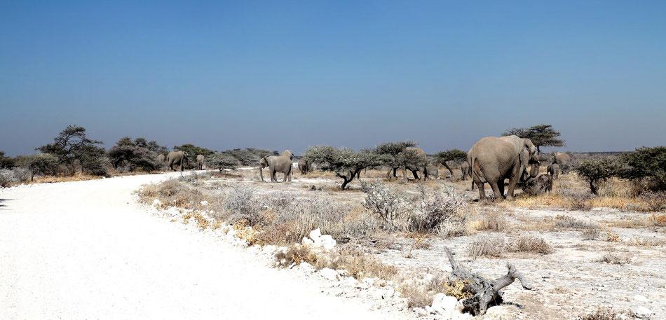 Etosha, Parc National, Namibia ...   Vue à 160 ° , 40 × 100 cm