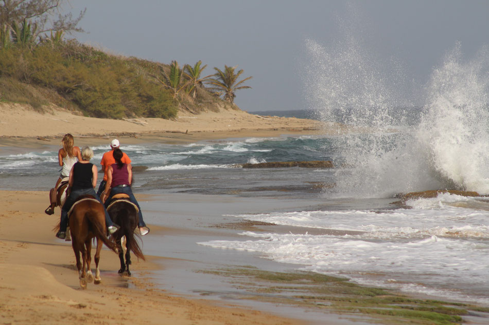 Puerto Rico Beach Horseback Riding