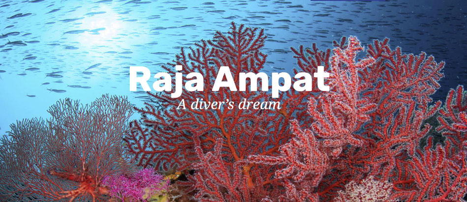 Photo of corals of Raja Ampat, with writing 'A diver's dream'