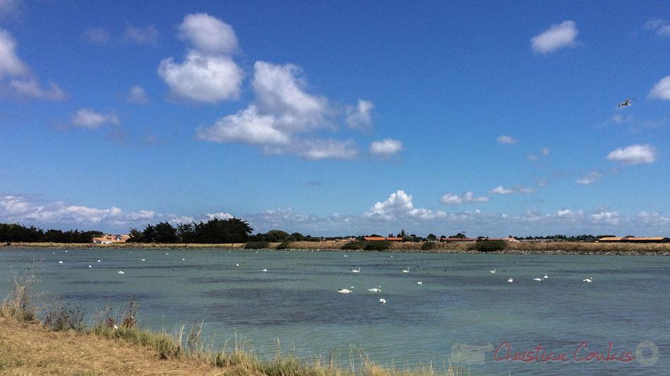 """""""Lac des cygnes"""" près de Noirmoutier en l'Île, Île de Noirmoutier, Vendée, Pays de la Loire"""