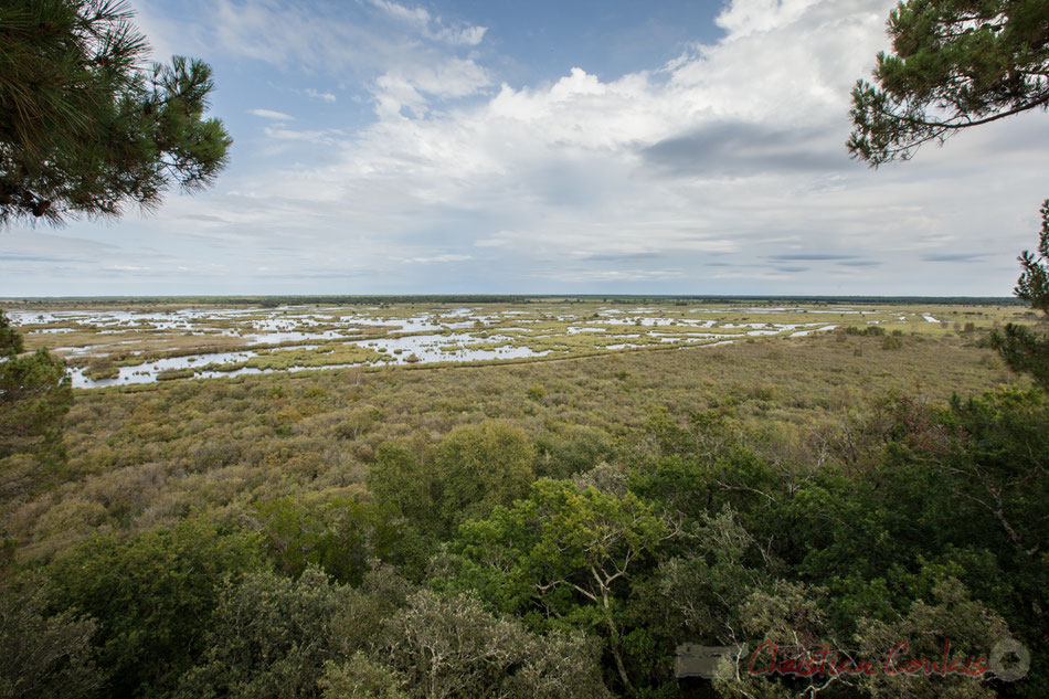 Depuis la tour d'observation de la Réserve naturelle de l'étang de Cousseau, Lacanau