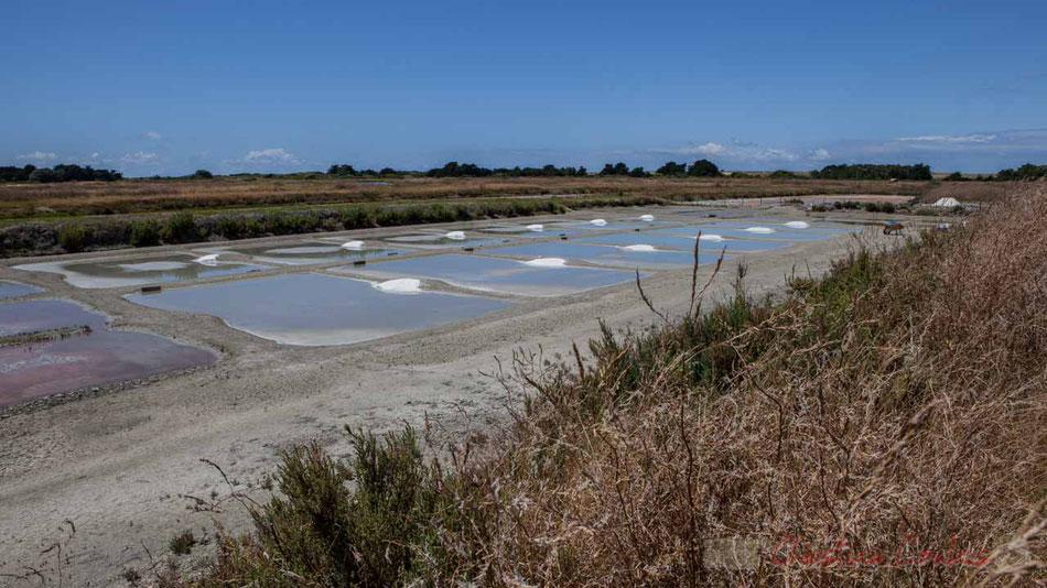 Les marais salants de l'Île de Noirmoutier refuges propices aux oiseaux, Vendée, Pays de Loire