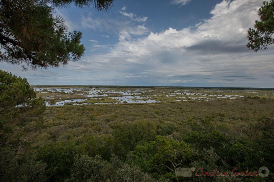 Réserve naturelle de l'étang de Cousseau, ici les marais.