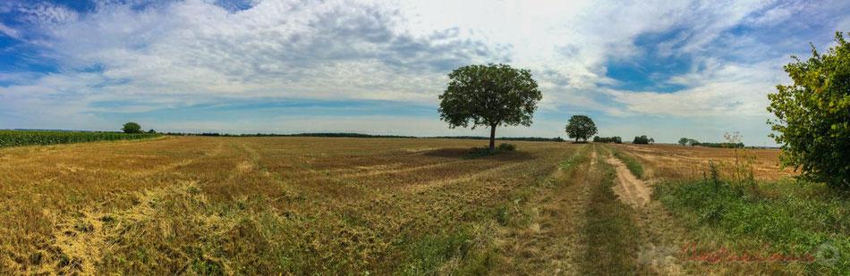 Plaine céréalière du Haut-Poitou, après la moisson d'un champ de blé à Avanton