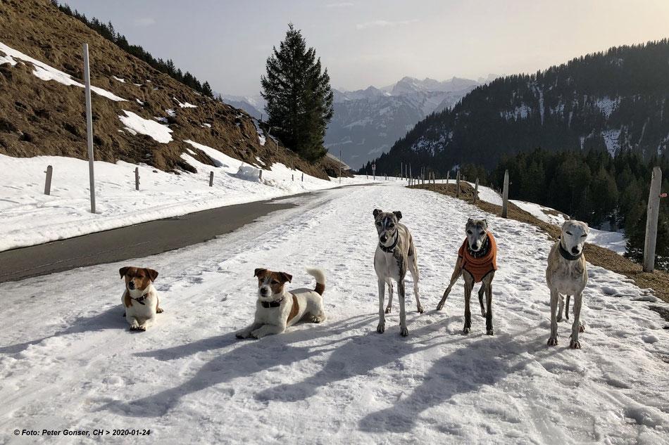 Henry, Biscuit, Enya, Vicky und Camilla auf dem Glaubenberg...