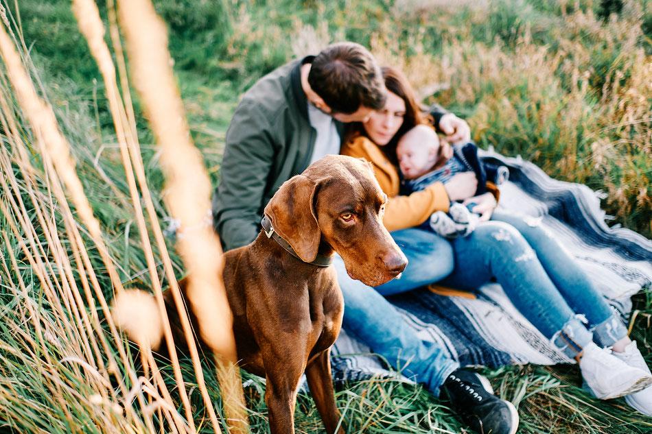 Familienfotos Bremen mit Hund, Familienfotografie Bremen, Fotoshooting Bremen