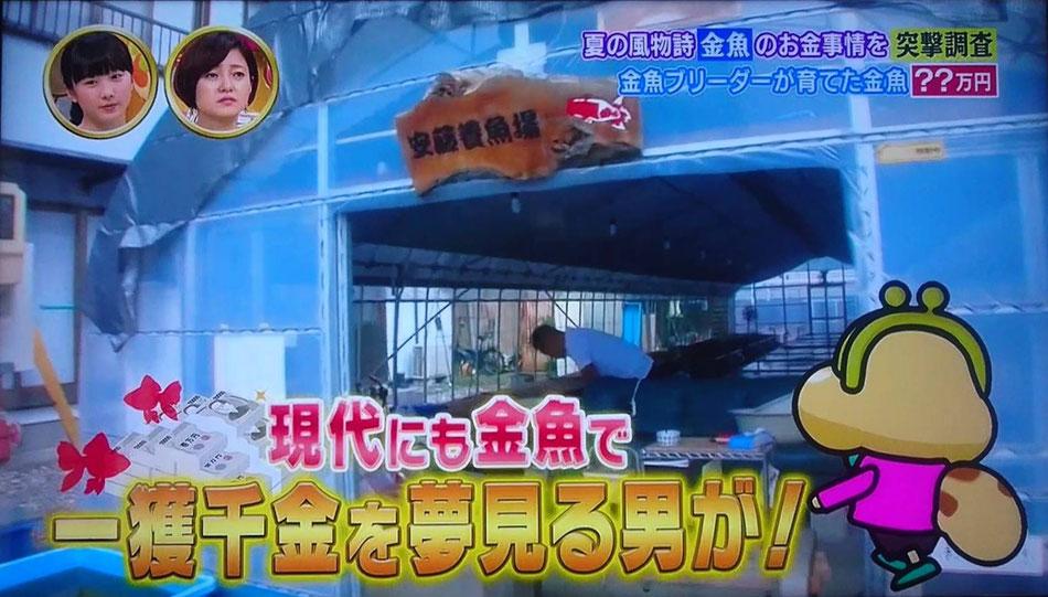 NHK総合・突撃!カネオくんの画像