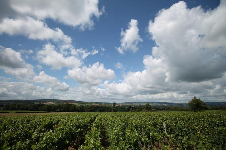 Terroir de Bourgogne