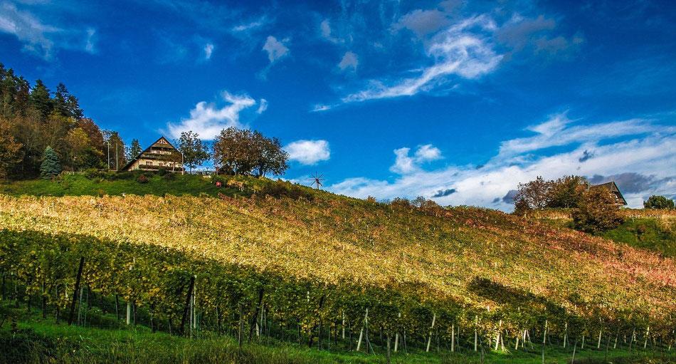 Vignoble du Langedoc-Roussillon
