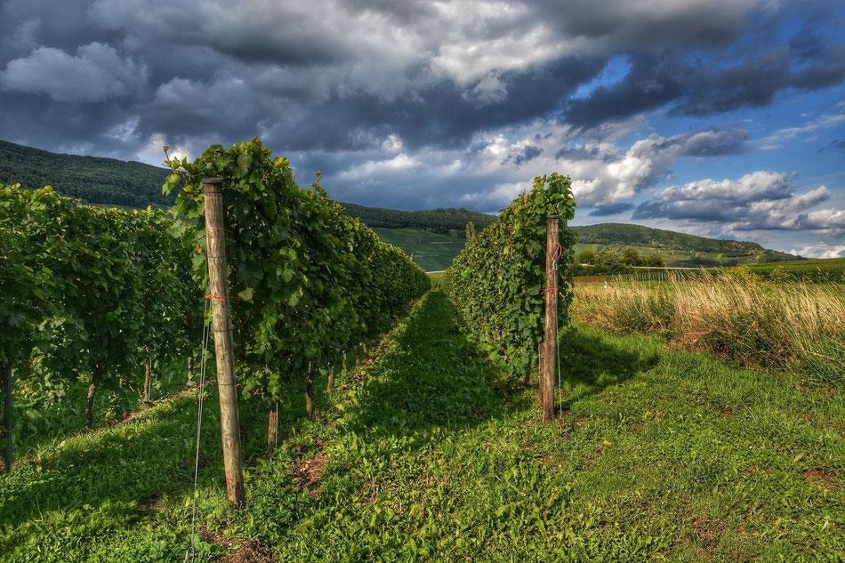 Vignoble bordelais