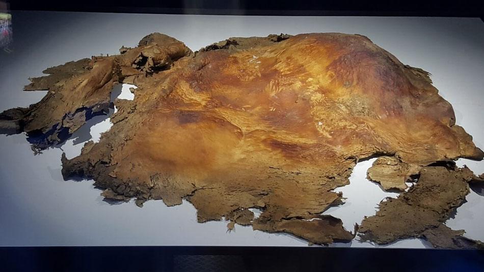 31,150年前のマンモスの皮膚。