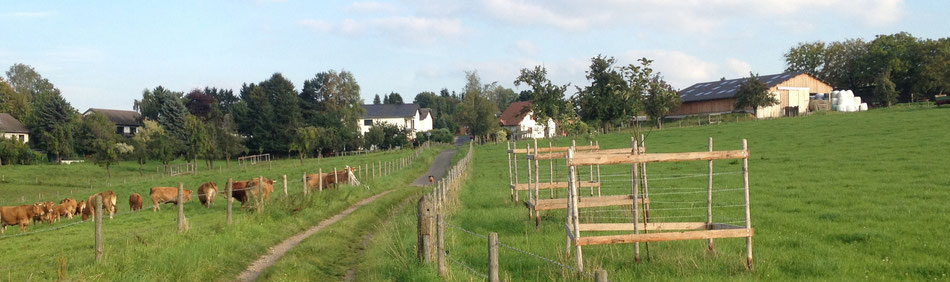 Die Umgebung des KERNBACHHOF mit seinen Limousin-Rindern