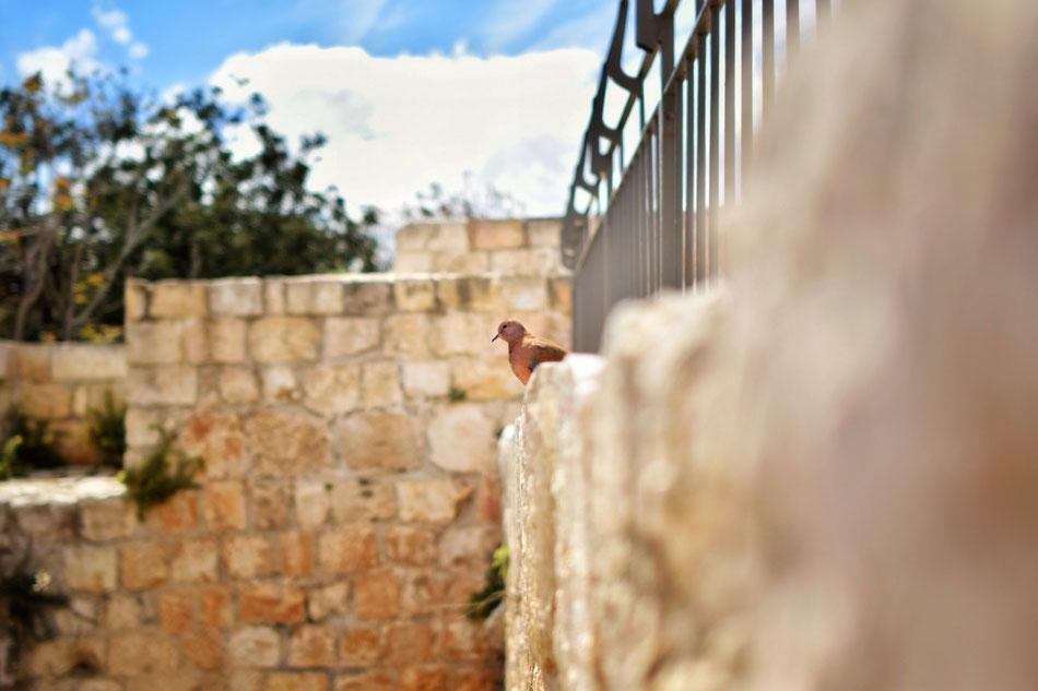 Mur d'enceinte de Jerusalem.