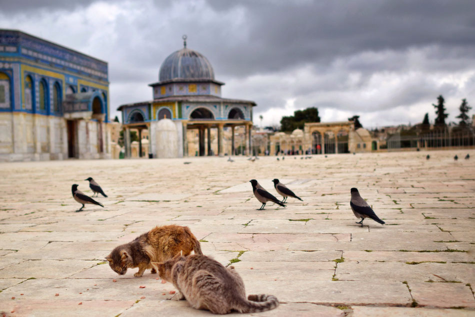 Esplanade des mosquées.
