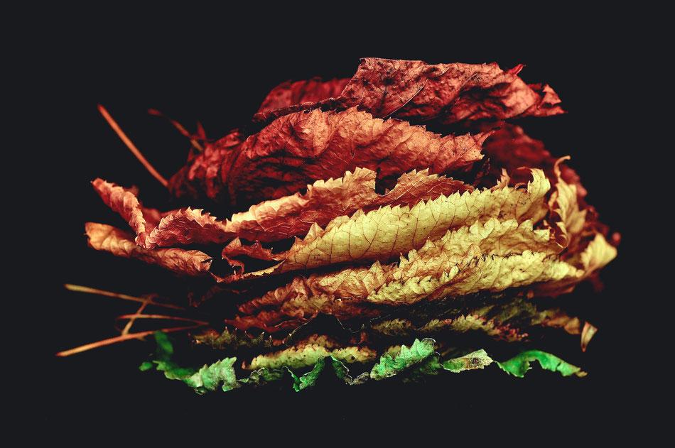 Autumn hamburger - davide ragusa