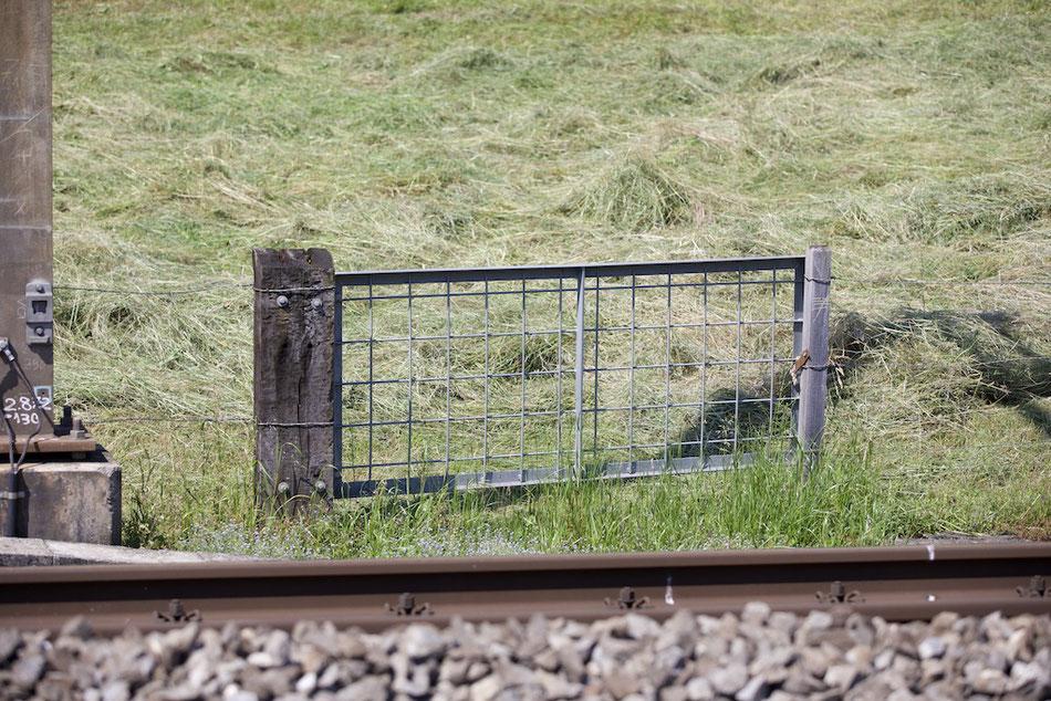 Zaun mit Tor entlang der Eisenbahn-Strecke Immensee - Arth-Goldau