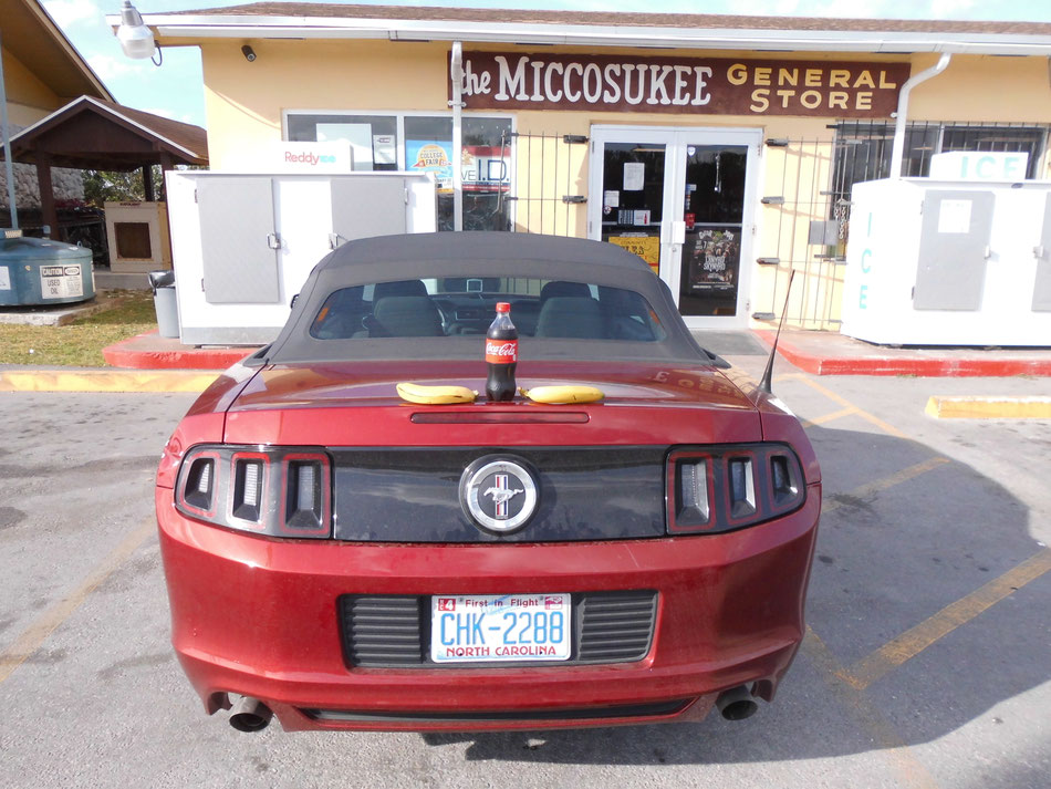 Bild: Ford Mustang, HDW, Florida, Everglades, Miccosukee