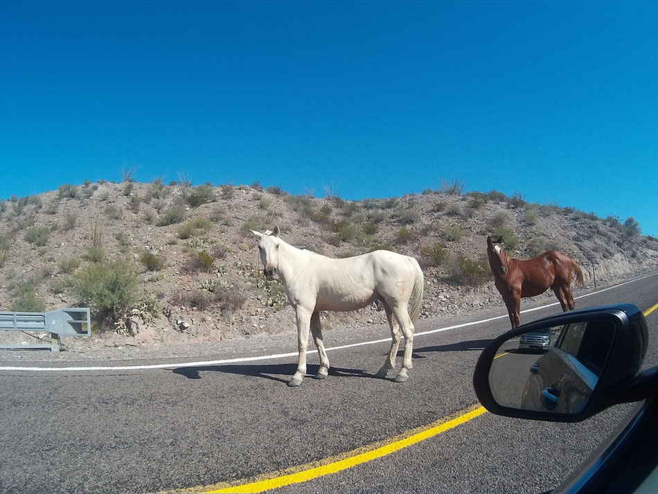 Bild: Big Bend Horses