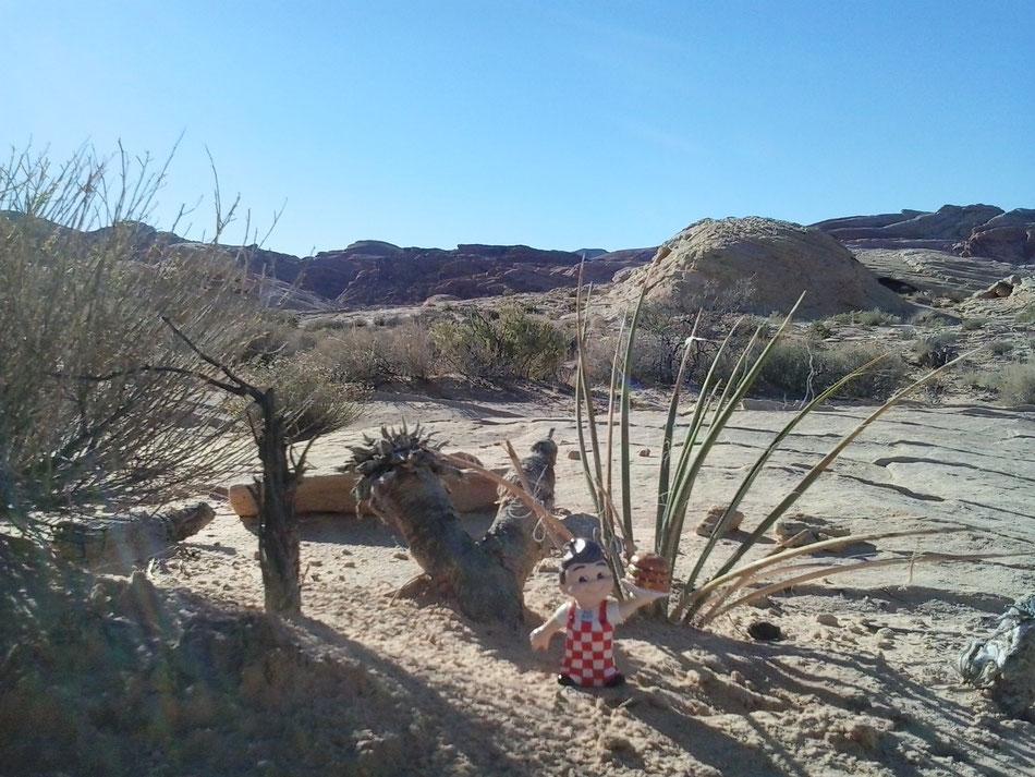 Bild: HDW-USA, Las Vegas, Los Angeles, Highway, Route 66, Amerka, Mister T. und der Weiße Büffel