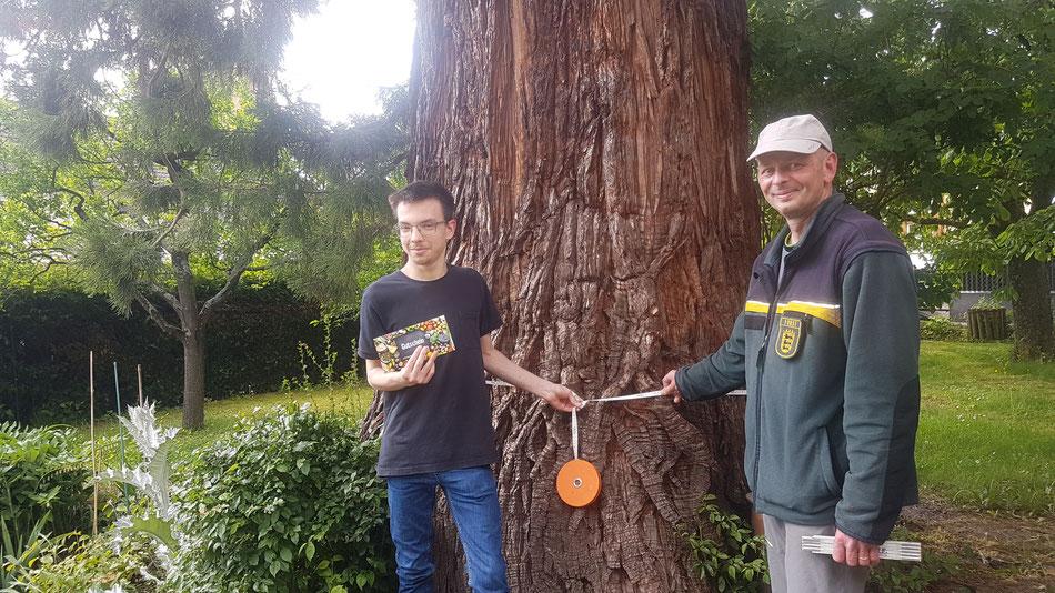 Förster Micheal Deschner hat nachgemessen. Den dicksten Baum hat Tim Kirchknopf benannt. Foto: privat