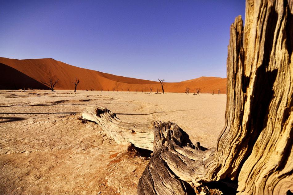 Die Salzpfanne des Sossusvlei liegt in der Mitte des Namib-Naukluft-Parks in der gut 32.000 Quadratkilometer großen Dünen- oder Zentralnamib.