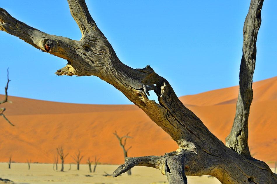 Sossusvlei, Namibia. Eine von Sanddünen umgebene Salztonpfanne. Mit bis zu 300 Metern Höhe gehören die rötlichen Sanddünen zu den höchsten der Welt.