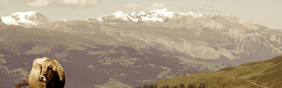 Schweiz Berge Alm Kuh Schnee