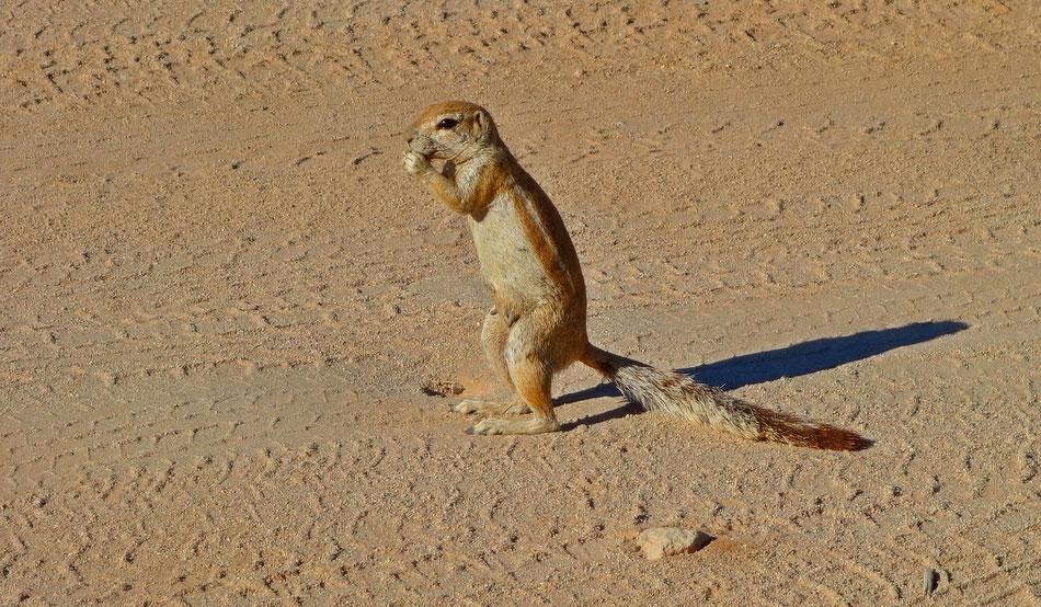 Solitaire, Namibia. Solitaire ist seit 1848 eine private Siedlung auf der gleichnamigen Farm im zentralen Namibia am Rande des Namib-Naukluft-Park