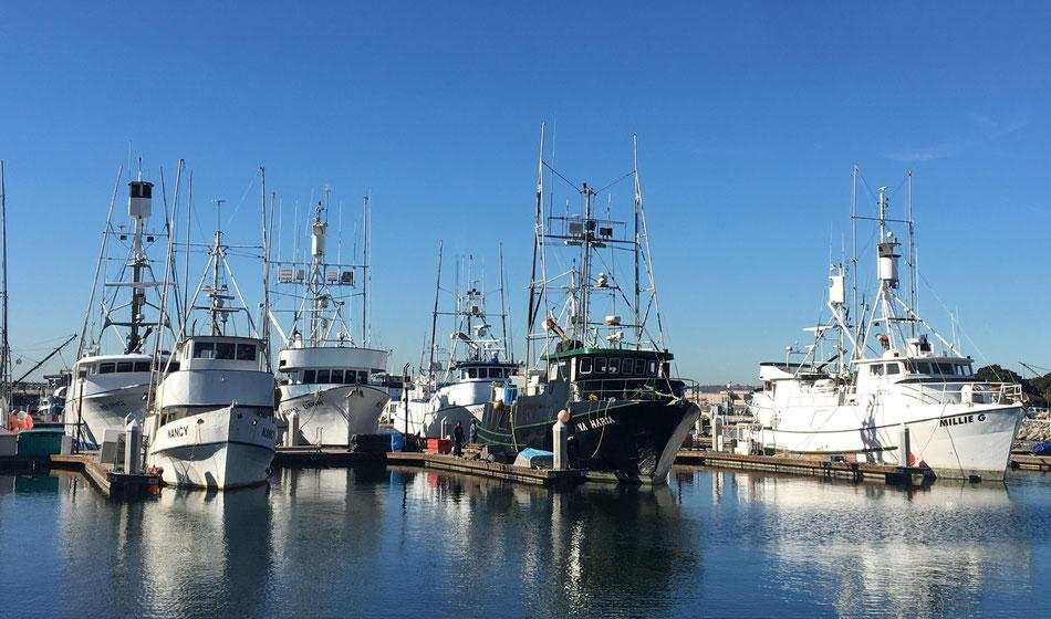 BBM Marine Pro zout-zeewater, corrosie bestendige Led-armaturen IP68 voor visserij vissersboten vissersschepen offshore BBM Ledproducts 2