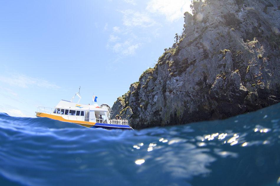 ニュージーランドのプアナイツアイランド。ダイビングが上手になったら海外の凄い海で潜ることも出来るようになります!