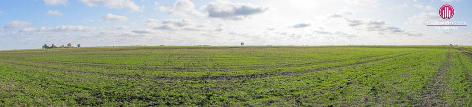 Carina Rossier Inmobiliaria Vende Campo en Colonia Santa Rosa, Entre Ríos. Se venden 140 hectáreas Agrícolas en Entre Ríos. #Campo #Ganadería #Agricultura #EntreRíos