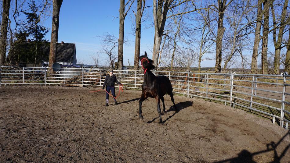 Foto: Raimund Kniffki / Horse-Human-Harmonie / 03.18 - Cenzie wird hier sehr deutlich.