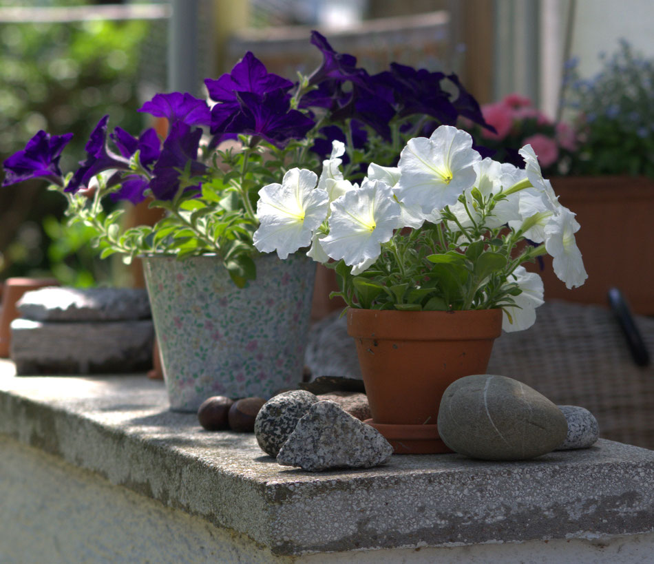 Frühling im Garten (Alsbach a.d. Bergstraße) 18.05.2015  Foto Silke Bogorinski
