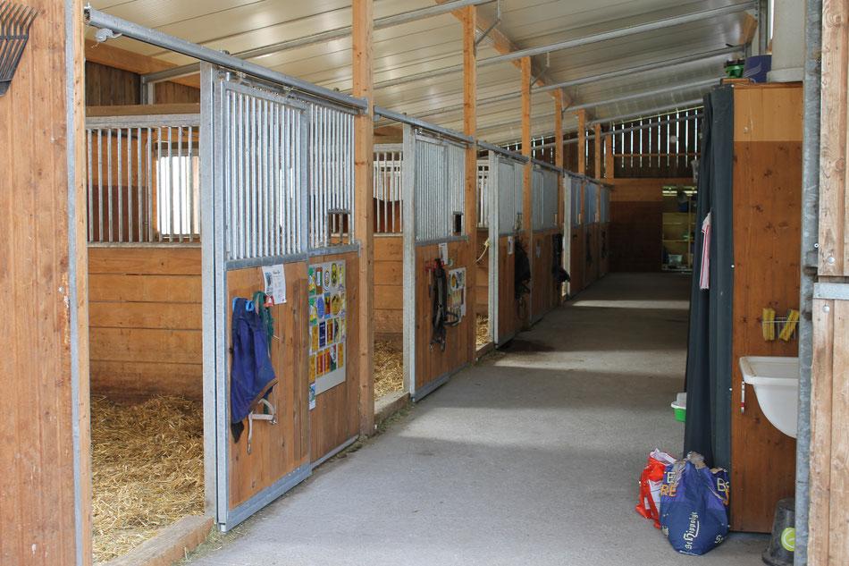 Pferdepension Tüfi Pferdeboxen