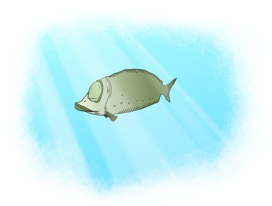 poissons tropicaux mer du sud