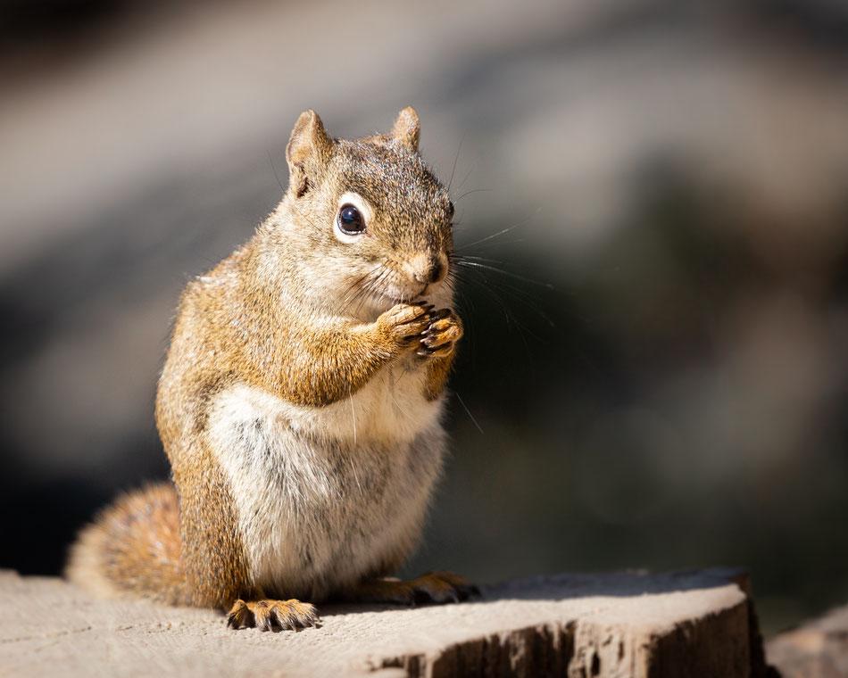 Canada Memos - The Squirrel :: Copyright Martin Schmidt, Fotograf für Schwarz-Weiß Fine-Art Architektur- und Landschaftsfotografie aus Trier