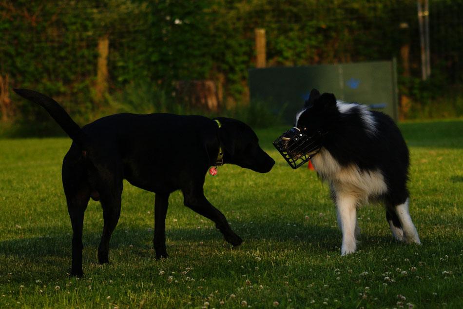 Barny und Finch, zwei intakte Rüden. Foto: Nina Dany
